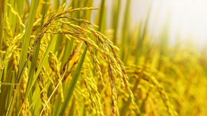 Logistics cho hàng nông sản Việt xuất khẩu