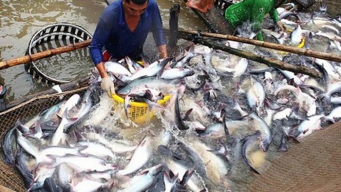 Xuất khẩu cá tra sang EU chưa thoát khỏi mức tăng trưởng âm